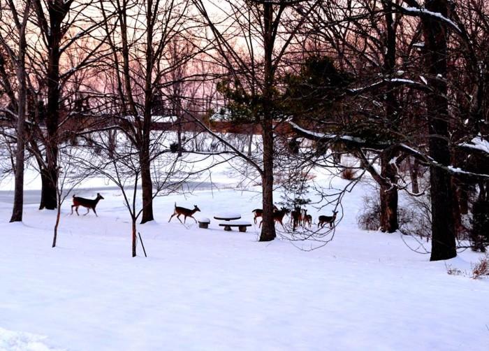7. Deer in Shelbyville