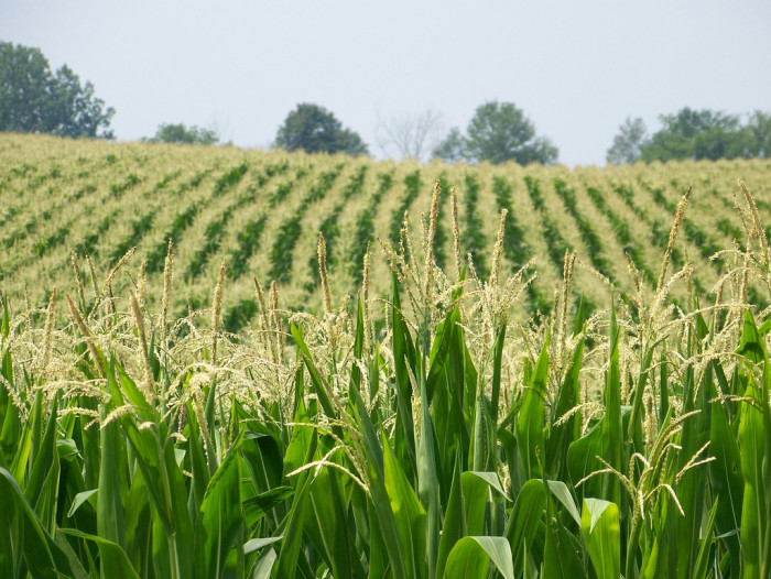 5. Indiana is more than just a giant cornfield. Seriously.