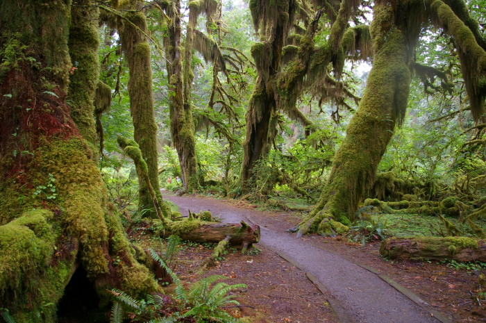 13. This fairy tale scene was captured along the trail in the Hoh Rainforest.