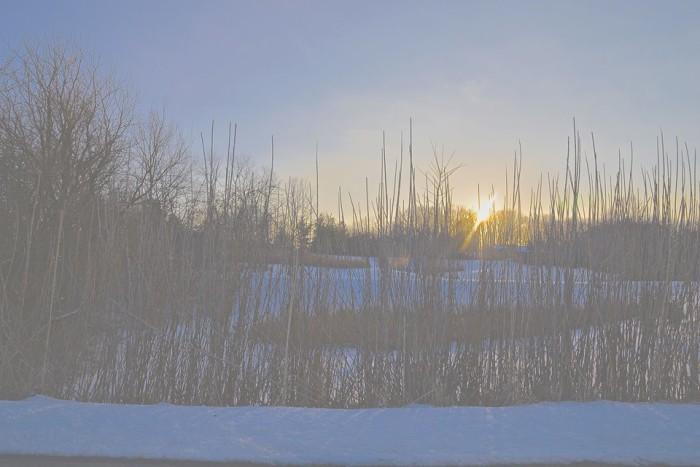 4. Grassy hillside at sunrise.