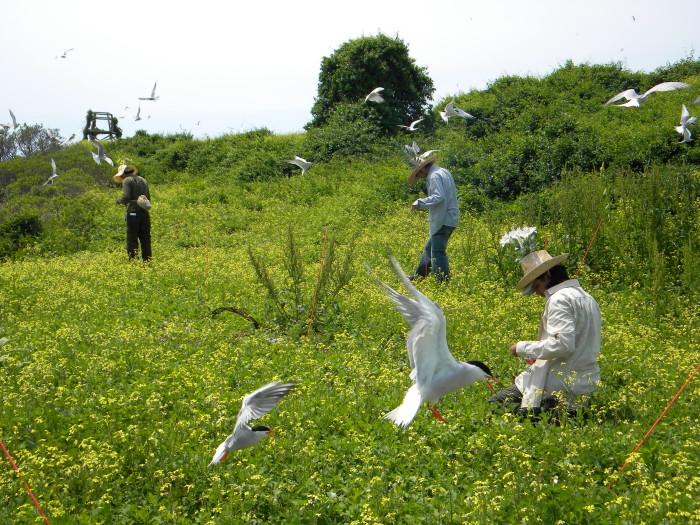 13. Gulls of Great Gull Island