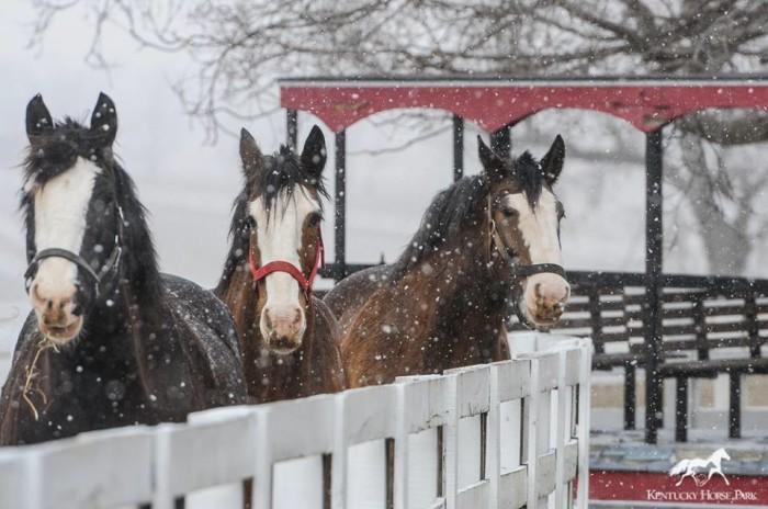 10. Kentucky Horse Park