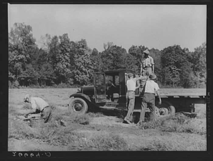 8. Potatoes being loaded on a truck in Monmouth County circa 1938.