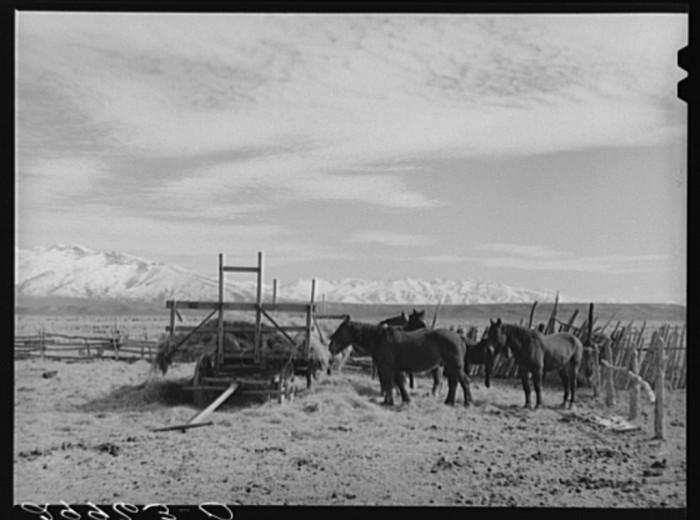 "12. ""Horses, cattle ranch. Elko County, Nevada."""