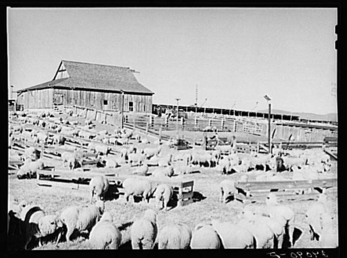 "8. ""Sheep ranch. Washoe County, Nevada."""