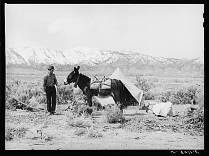 "3. ""Sheepherder preparing to break camp. Dangberg Ranch, Douglas County, Nevada."""