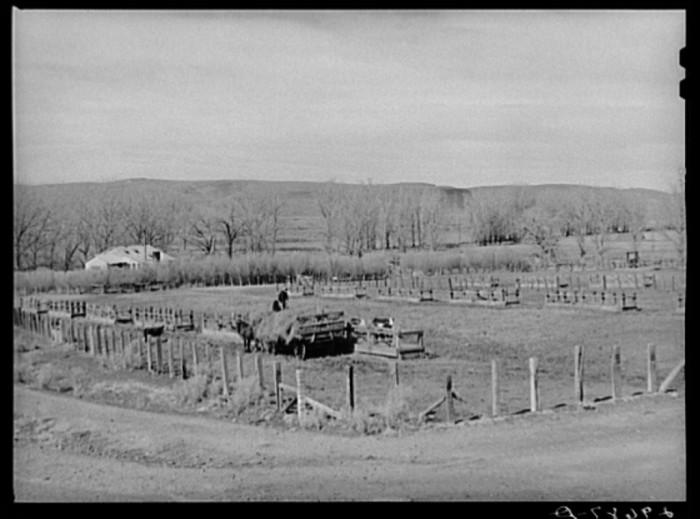 "7. ""Feeding cattle. Horshoe Ranch, Eureka County, Nevada."""