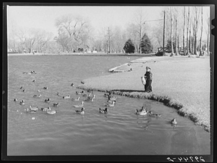 9. A young boy feeding ducks at a park in Reno, Nevada.