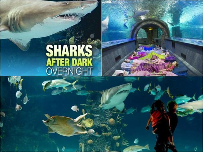 Newport Aquarium exhibits.