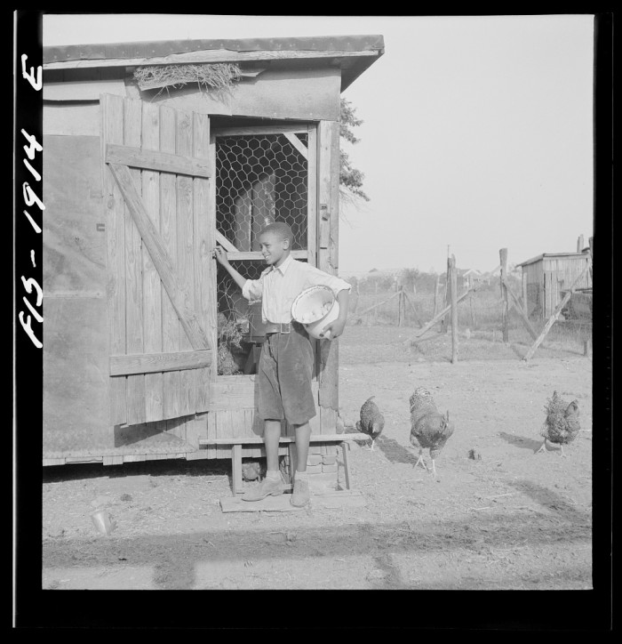 12. A young boy feeds chickens on his family's farm outside of Newport News, 1942.