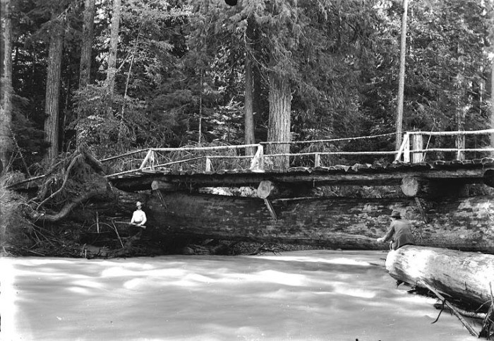 4. A log bridge spanning over the Nisqually River, 1907.