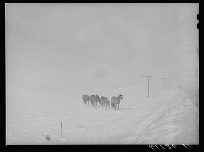 horses in snowstorm - life in south dakota