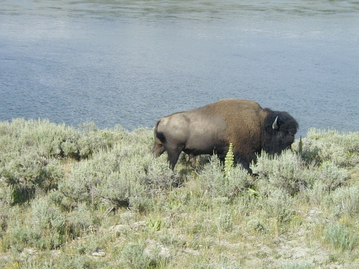 2. Yellowstone was the first national park in the world.