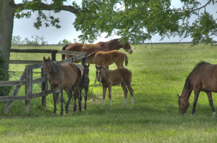 Quarterhorses, Thoroughbreds and Saddlebreds