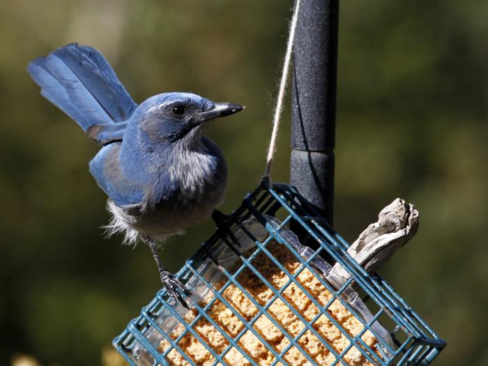 9. Randall Davey Audubon Center, Santa Fe
