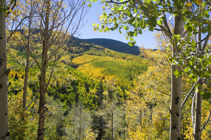 11. People associate leaf peeping with New England but, come fall, the aspens paint Santa Fe's Sangre de Cristo Mountains yellow.