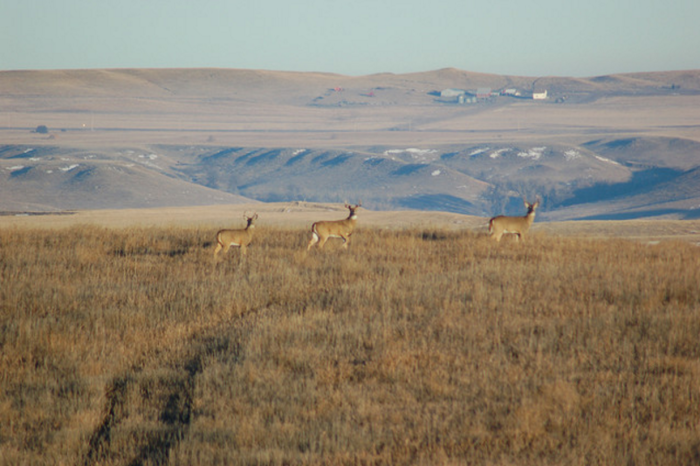 9. A distant farm and some deer in western North Dakota