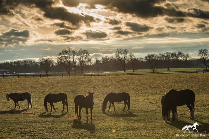 4. Spend some time at Kentucky Horse Park in Lexington.
