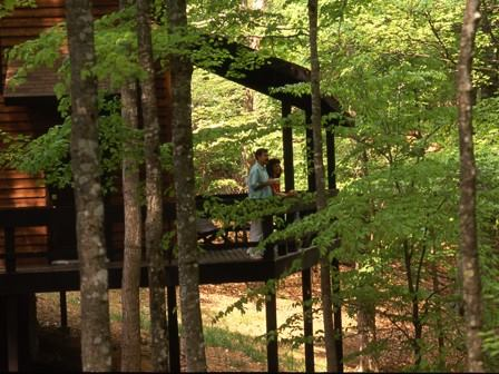 3. Stay in a cabin.