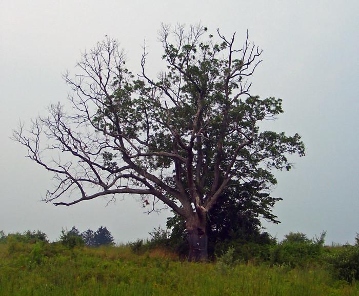 1. The Devil's Tree