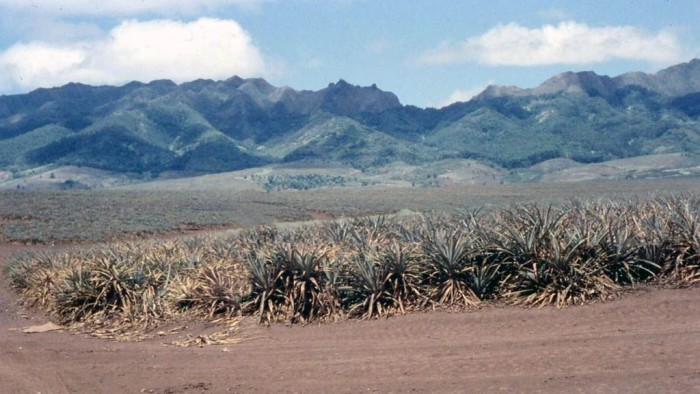 9) This photograph of Hawaiian pineapple fields makes us feel as though not much has changed throughout the years.