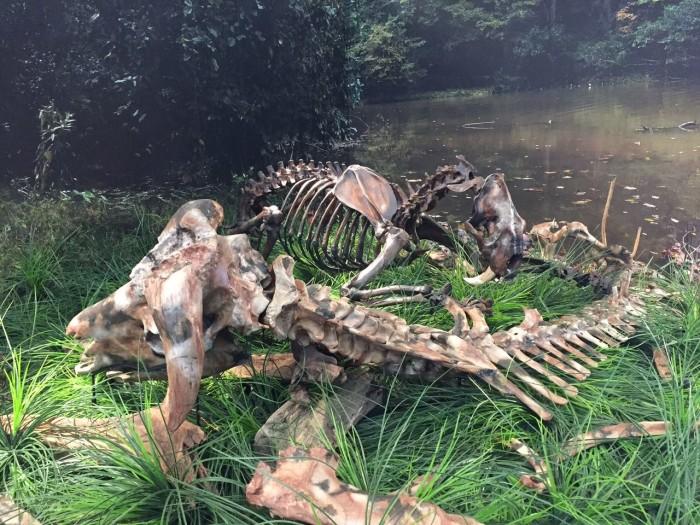 5. Virginia Museum of Natural History: Martinsville