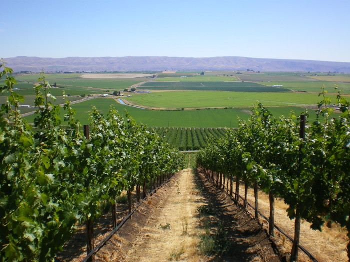 6. Go for a tasting in Washington's wine country.