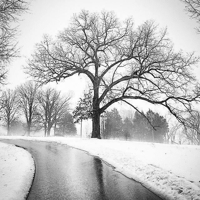 2. Winter tree