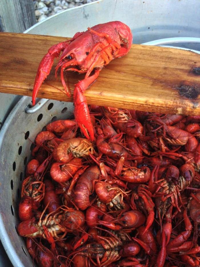 Zydeco's Crayfish