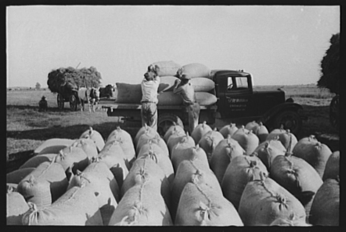14. Bags of threshed rice in the foreground, with loading operations in middleground, Crowley, Louisiana