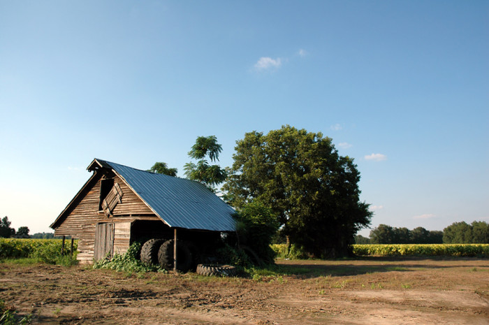 5. You routinely get to drive through beautiful wide open spaces in South Carolina...