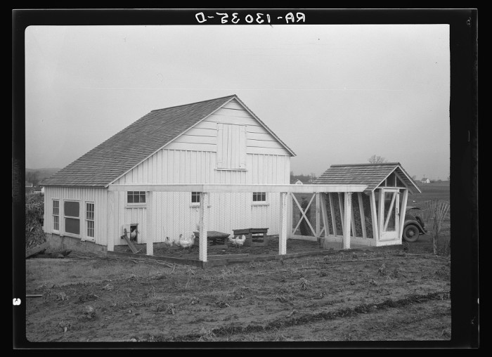 14. This barn, corn crib and chickens belonged to Mr. Hardin, a resettlement administrator homesteader on the Arthurdale project in Reedsville.