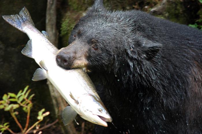 9. Bear Attack