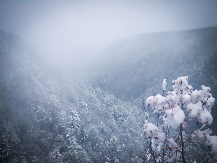 3. This is a beautiful shot of a  snowy Blackwater Falls State Park in Davis.