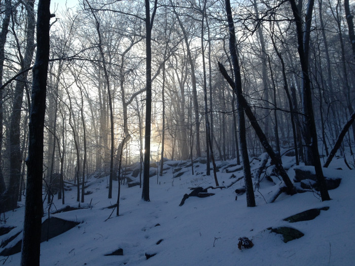 9. This was a foggy moment near the summit of the Blue Ridge Mountains in Shannondale.