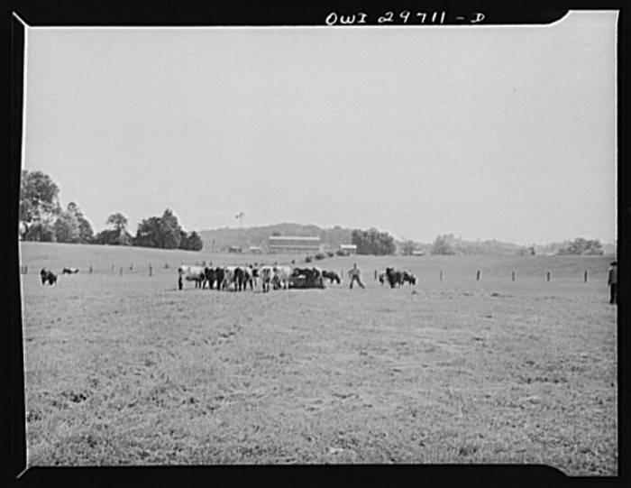 3. This was the farm of C.C. Lewis and Sons in Point Pleasant, 1943.