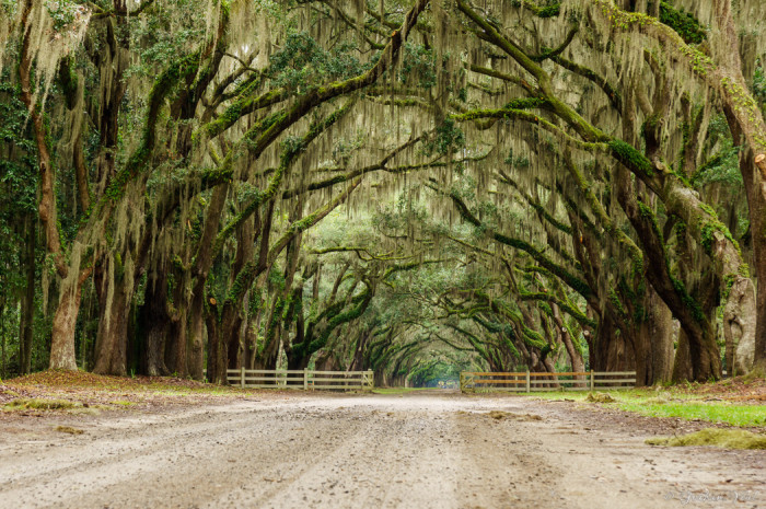 1. A long dirt road is draped in spanish moss in Charleston County.