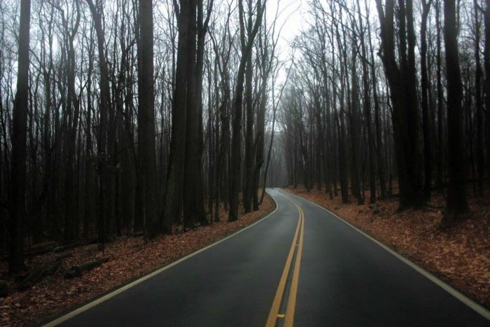 4. Coopers Rock State Forest