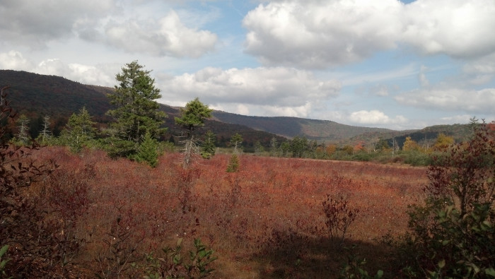 5. Cranberry Glades