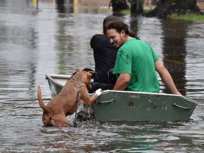 12. A dog climbs aboard a small boat as the waters rise in South Carolina.