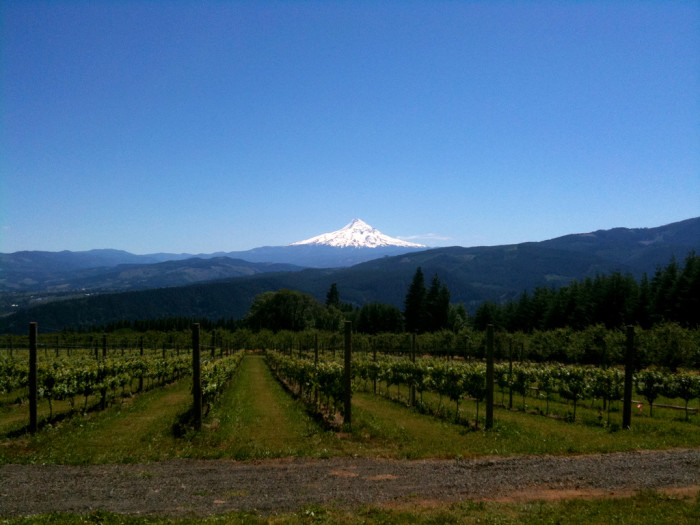 7. Take a wine tour in the Willamette Valley.
