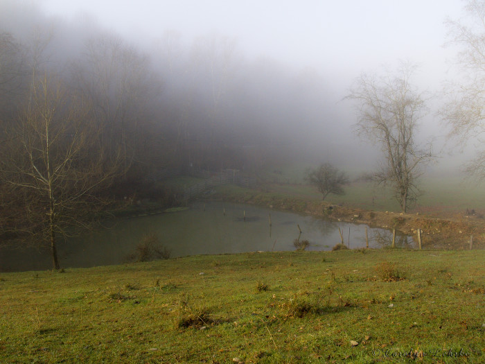 14. I like this one that shows fog on  a pond in rural West Virginia.