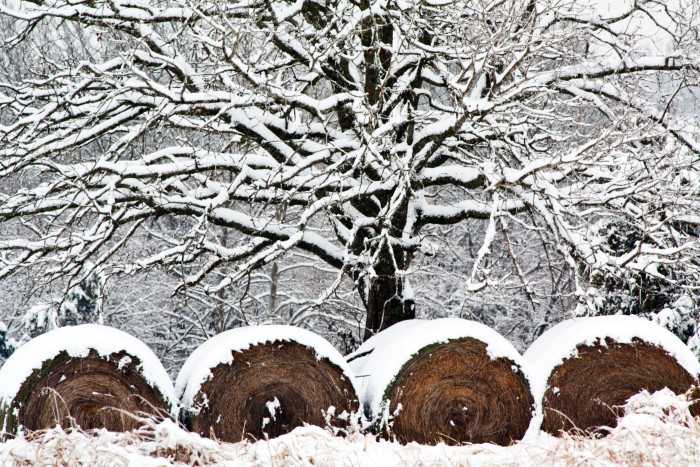 2. Snow Covered Hay Bales