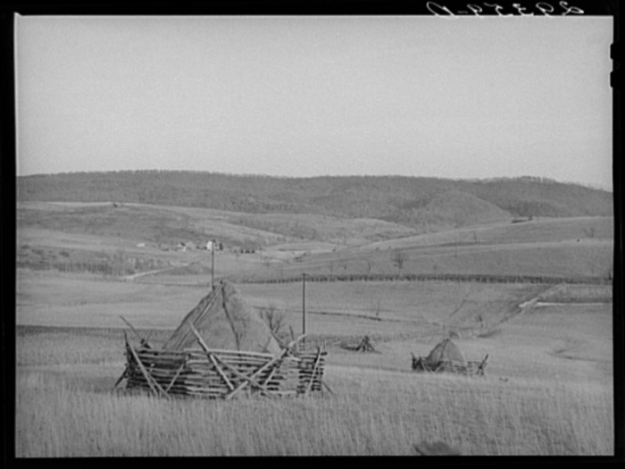 11. Here are some haystacks in Mineral County in 1940.