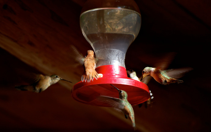 9. Seventeen species of hummingbirds pass through New Mexico on their annual migration trail.
