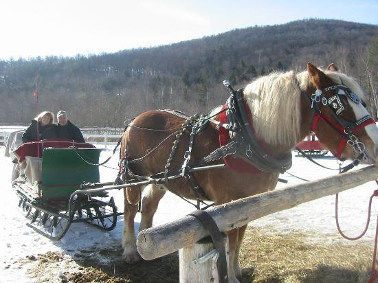 6.  Take a romantic sleigh ride.