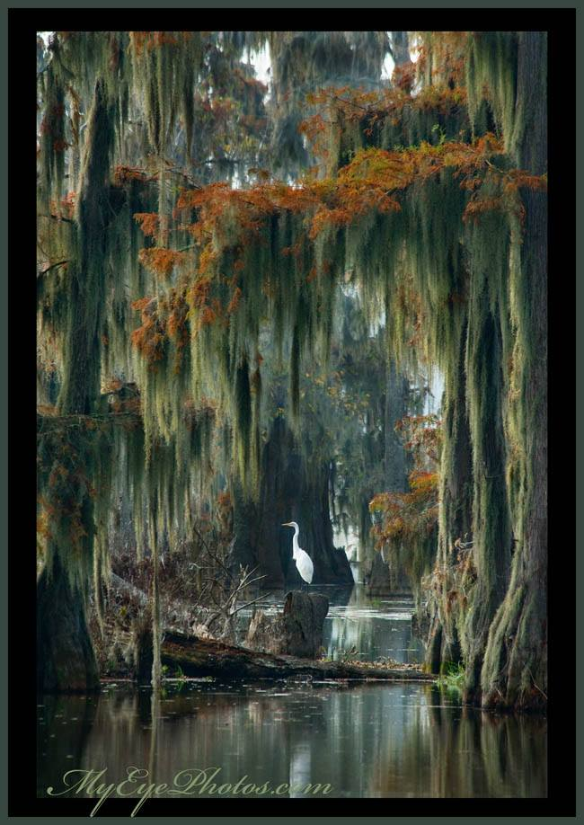 9. A single white bird framed by the most beautiful Spanish moss.