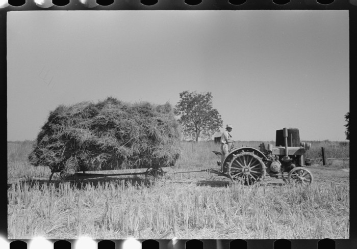 8. Latest method of transporting rice from the field to thresher, near Crowley, Louisiana.