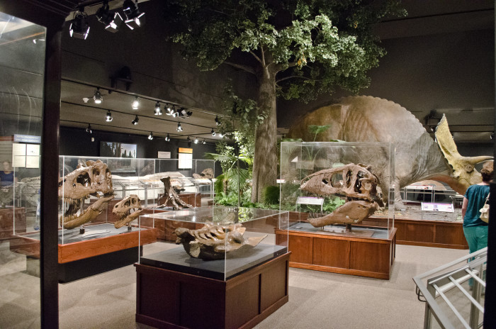 8. The Museum of the Rockies, Bozeman