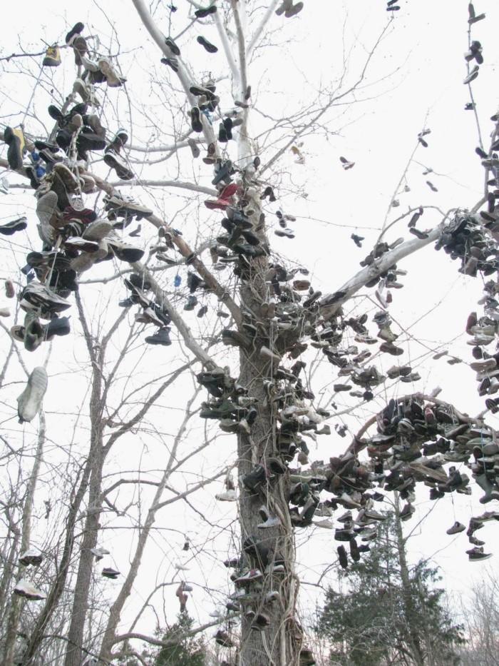 2.  The Shoe Tree In Milltown, IN.